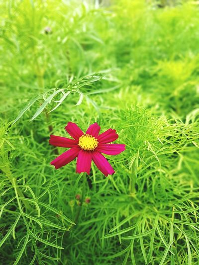 Blooming Blooming Ping Color Green Color Green Color Flower Nature Field Grass Beauty In Nature Growth