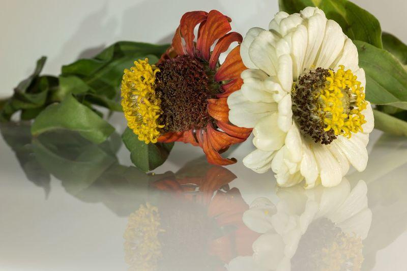 Flowers on glass table