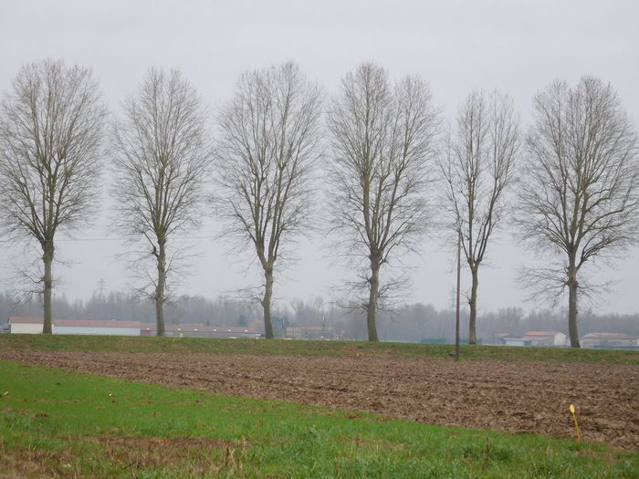 Country Field January LINE Weather Agriculture Bare Tree Beauty In Nature Day Field Grey Growth Landscape Nature No People Outdoors Plough Right Rural Scene Scenics Sky Tranquil Scene Tranquility Tree Trees Magic