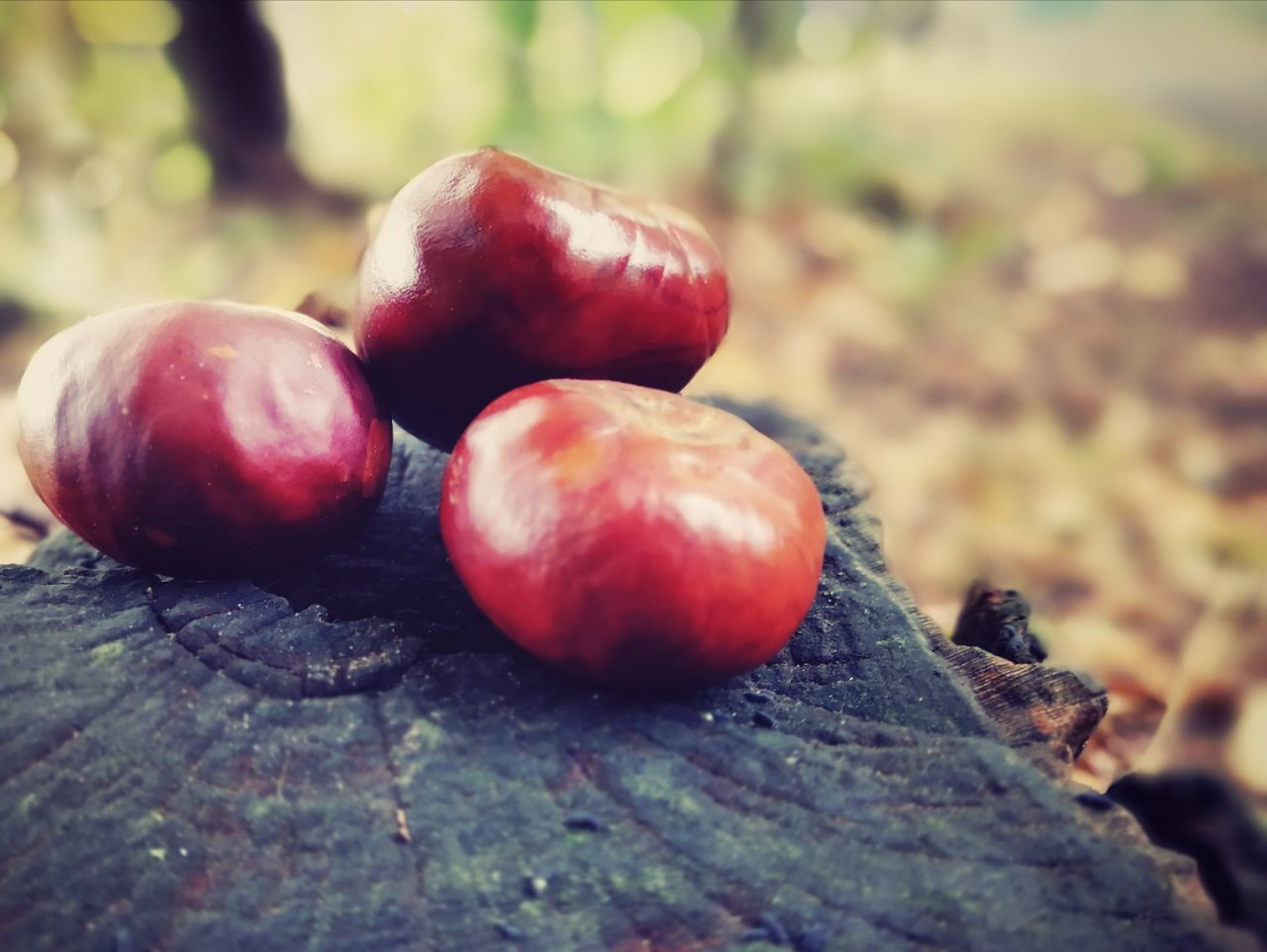 food and drink, food, healthy eating, fruit, wellbeing, close-up, freshness, day, selective focus, red, no people, focus on foreground, still life, nature, tree, wood - material, outdoors, table, ripe, berry fruit
