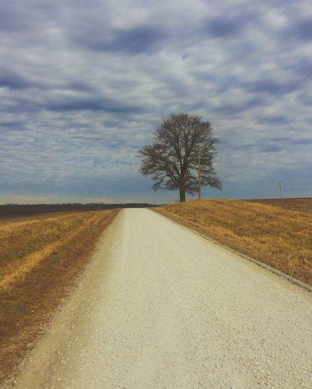 Single tree on sand against sky