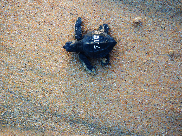 Close-Up Of Turtle On Sand