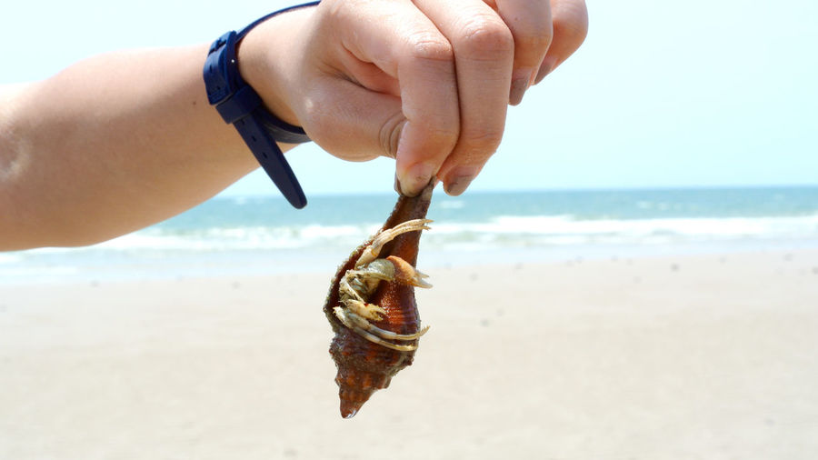 Cropped hand of woman holding hermit crab at beach