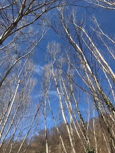 Tree Plant Tranquility Low Angle View Sky Beauty In Nature Bare Tree