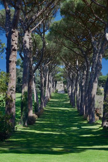 Castel Gandolfo  Park In The Vatican Pope Pope's Park Rome Vaticav Day Grass Nature No People Outdoors Park Park - Man Made Space Plant Sunlight Tranquility Tree Vatican Panorama