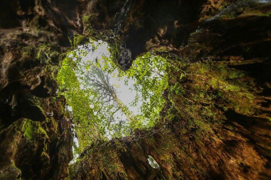 ウィルソン株 Nature Moss Forest Beauty In Nature Tree Outdoors Zeiss Vscogood Canon Planar50/1.4 OpenEdit Introducing Culture Of Japan Which Must Be Left To The Future…… 未来に残す日本の文化 CarlZeiss The Week Of Eyeem EyeEm Best Shots Eyemphotography Vscocam Japan Hiking