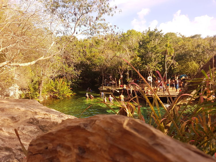 Tree Nature Sky Water Tranquility Day Beauty In Nature Sunlight Cenotes Paradise Nature Photography