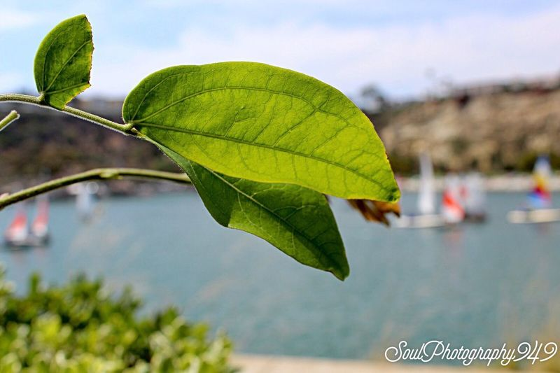 Simply beautiful Dana Point Harbor Leaf Close-up Beauty In Nature