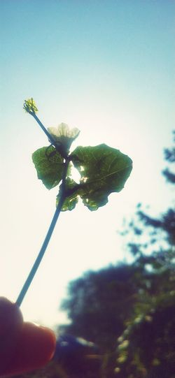 Close-up of hand holding flowering plant against sky