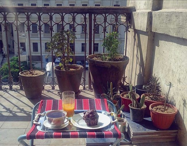 Breakfast First Eyeem Photo Breakfast Petit Dejeuner Balcony Balcon Plants 🌱 Cactus Cupcake Tea Juice