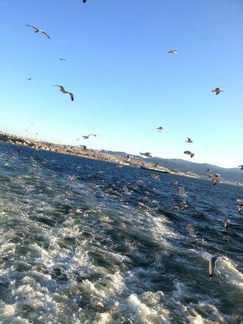 Sea Seagull Sky View Steamship Good Day One Year Ago Turkey Izmir