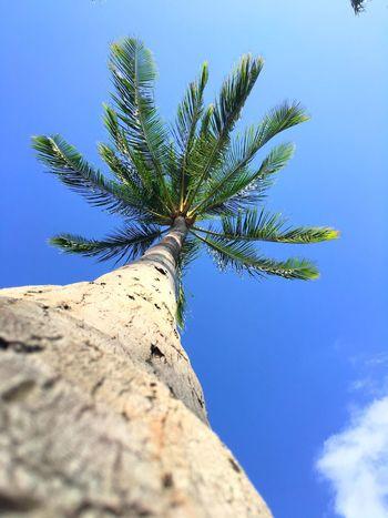 Palm Trees Scenery Beach Honolulu, Hawaii Honolulu  Oahu Islandlife Hawaiinei Simplicity