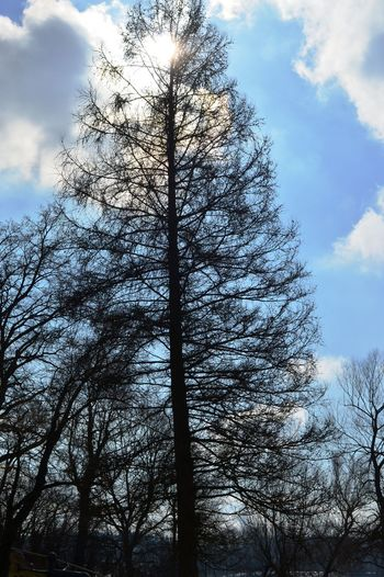 Tree Trunk Tree Tranquility Sky Outdoors No People Nature Low Angle View Growth Forest Day Cloud - Sky Branch Beauty In Nature Bare Tree