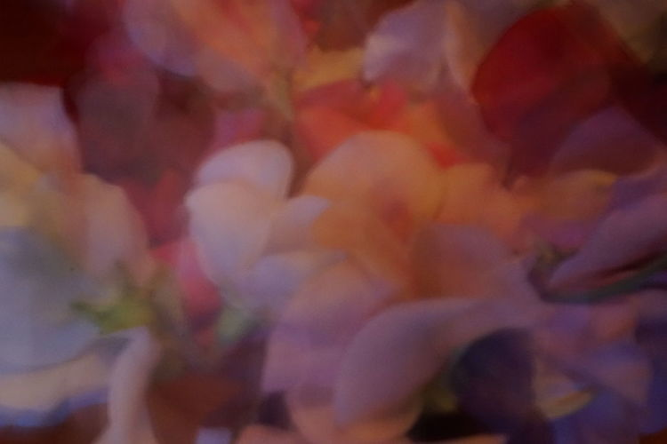 Backgrounds Beauty In Nature Blossom Close-up Day Flower Flower Head Fragility Freshness Full Frame Growth Nature No People Outdoors Petal Springtime Sweet Pea Blur Color Palette Floral