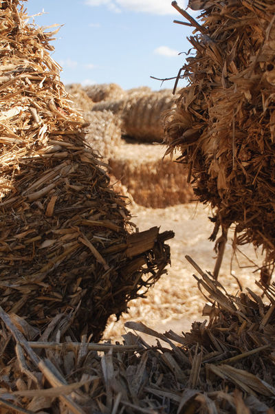 Thatch Piled Up Pile Of Straw Yellow Color Blue Blue Sky Bale  Straw Outdoors 43 Golden Moments Light And Shadow