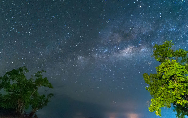 milky way rise above trees Star - Space Astronomy Space Plant Tree Night Sky Beauty In Nature Nature Galaxy No People Scenics - Nature Tranquility Tranquil Scene Star Outdoors Low Angle View Star Field Milky Way Growth