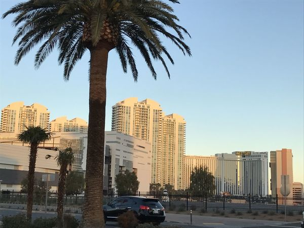 Architecture Building Exterior Built Structure Car City Cityscape Clear Sky Day Growth Land Vehicle No People Outdoors Palm Tree Sky Skyscraper Tall Transportation Tree