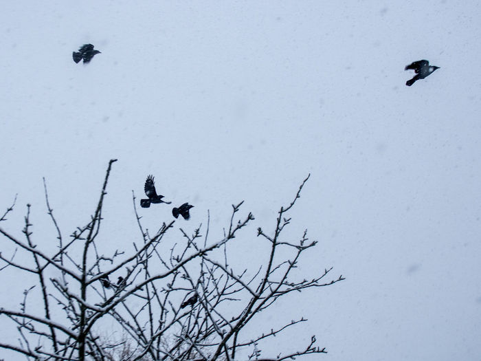 Birds perching on bare tree during winter