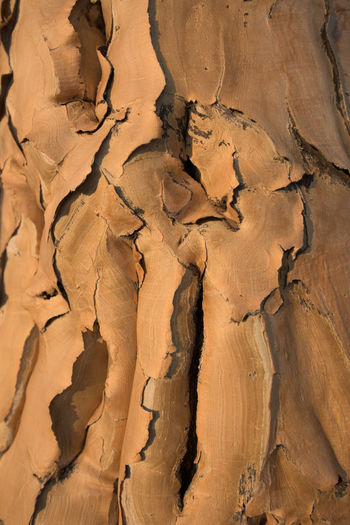 Backgrounds Barks Of A Tree Beauty In Nature Close-up Full Frame Nature No People Outdoors Pattern Quivertree  Scenics