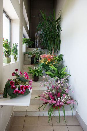 Beauty In Nature Building Interior Day Details Of My Life Flower Flower Pots Freshness Garden Gardening Growth Houseplant Flower Houseplants Indoors  Indoors Plant Interior Interior Design Nature No People Plant Potted Plant Table White Background Window