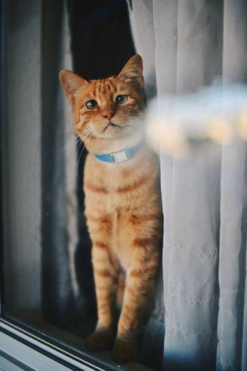 Cat looking through window