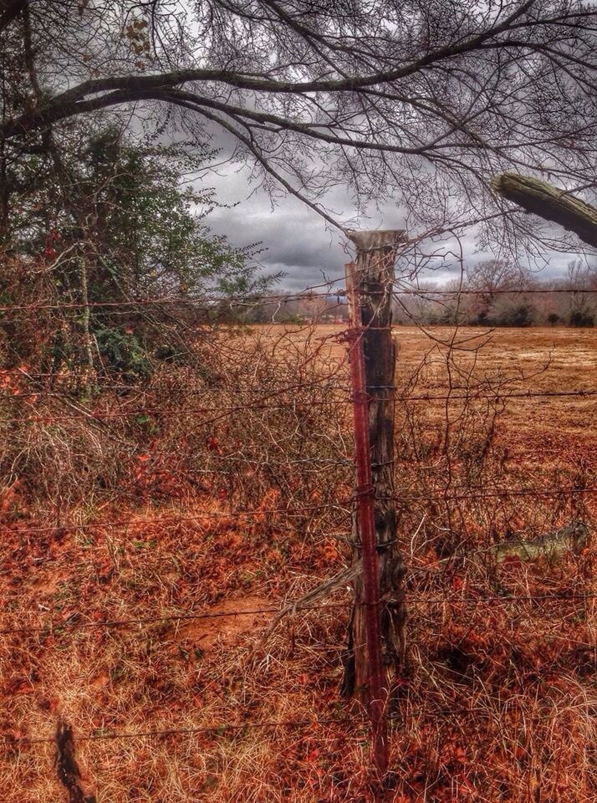 field, tree, tranquility, landscape, rural scene, tranquil scene, growth, sky, nature, bare tree, agriculture, dry, scenics, grass, beauty in nature, autumn, plant, day, branch, outdoors