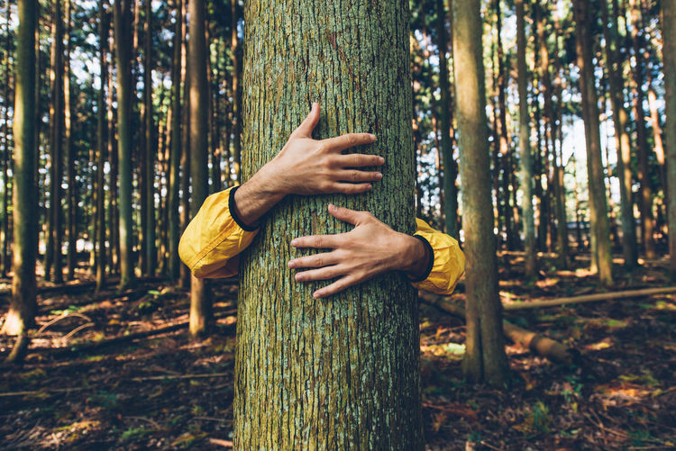 Woman hand holding tree trunk in forest