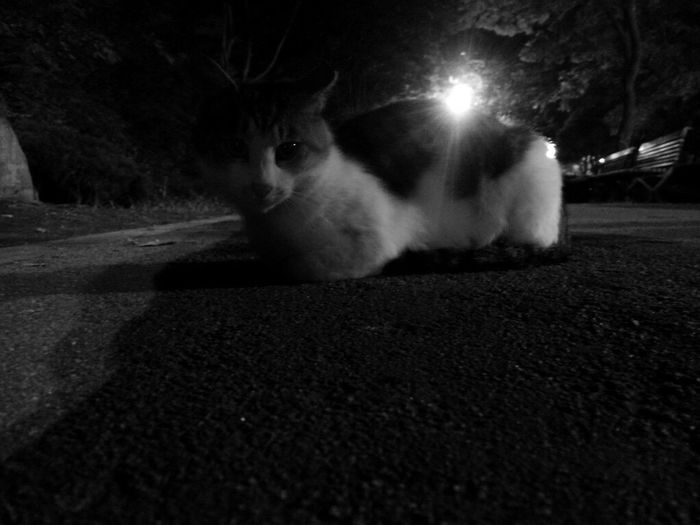 People And Cats Seokchon Lake Cats Close-up Feralcat Night Cat Black Color No People Catlover Cat Lovers Night