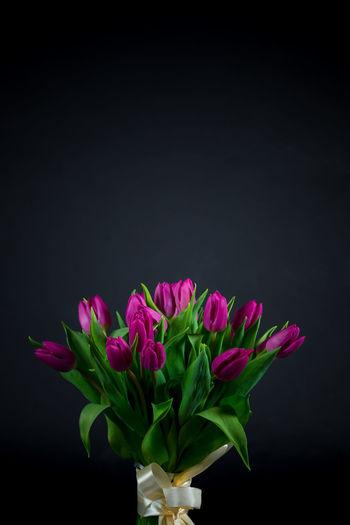 Black Background Bouket Flower Arrangement Freshness Green Isolated Tulips Fragile Fragility Holland Holland Flowers Isolated On Black Purple Purple Flowers Studio Shot Tulips Flowers