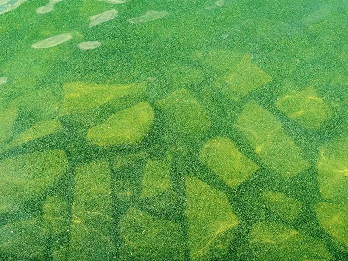 Full frame shot of water drops on grass