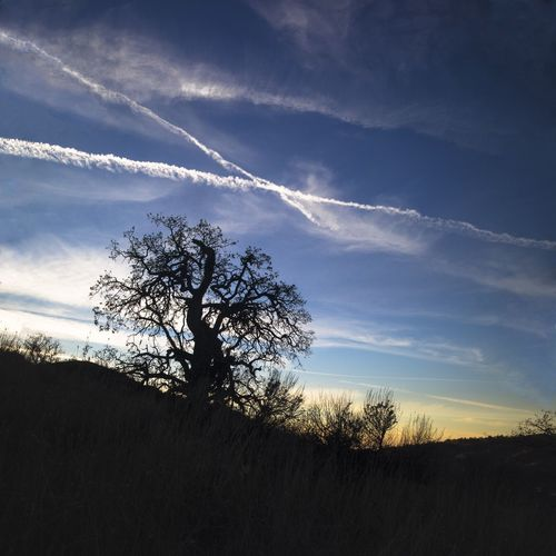 Contrails at Sunset . TehachapiCalifornia Southern California Oak Tree Outdoor Photography