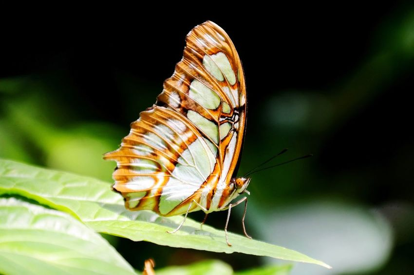 fragile Macro Photography My Point Of View Insect Photography Insel Mainau Bodensee Beauty In Nature Macro Beauty Butterfly - Insect Insect Perching Animal Themes Close-up Animal Antenna Butterfly