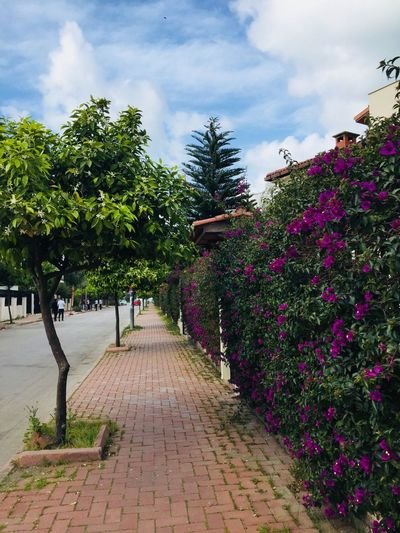 Spring flowers have already bloomed in Adana Orangetree Orange Portakalçiçeği Purple Gelinduvagi Spring Nofilter Tree Growth Outdoors Day Cloud - Sky Sky Nature The Way Forward Flower Walkway Beauty In Nature No People Stories From The City Stories From The City EyeEmNewHere