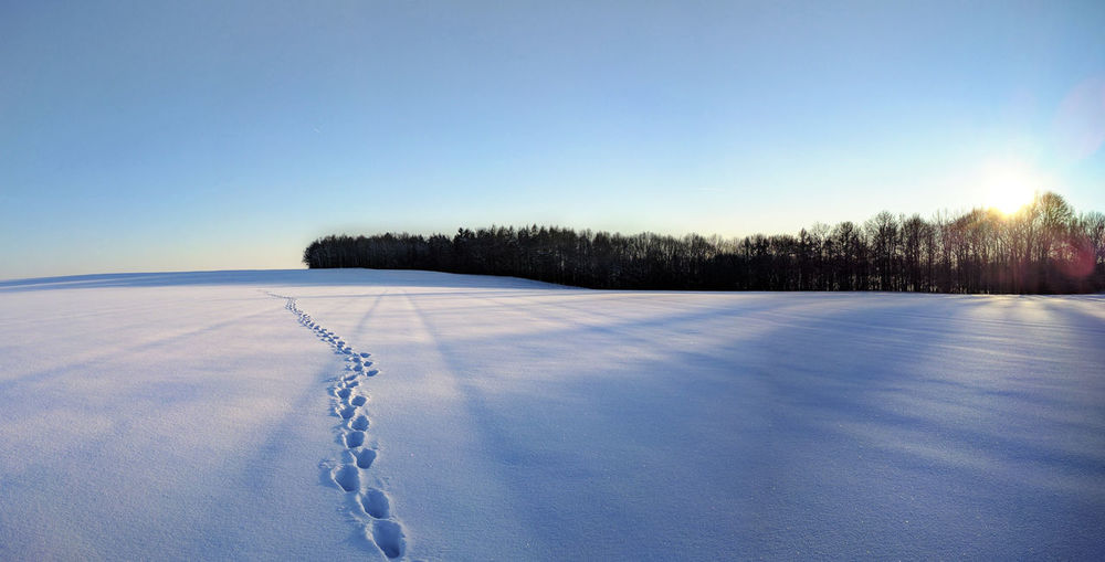 Winter Hike Panorama Snow ❄ Beauty In Nature Blue Clear Sky Cold Temperature Day Field Frozen Germany Landscape Nature No People Outdoors Panorama View Scenics Sky Snow Tranquil Scene Tranquility Tree Waldheim White Color Winter Winter Wonderland
