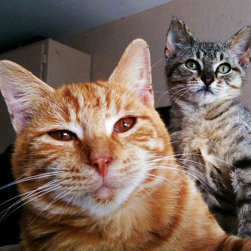 Morris and bo Hanging Out Taking Photos Relaxing Enjoying Life Cheese! Catlovers Kitty Shopkittys