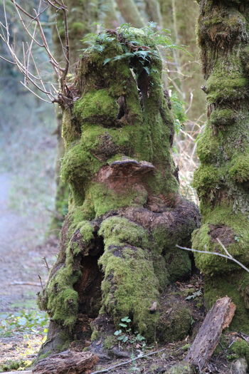 Moss & Lichen Pacific Northwest  Pacific Northwest Beauty Beauty In Nature Close-up Day Focus On Foreground Forest Growth Lichen Moss Nature No People Outdoors Plant Tranquility Tree Tree Trunk