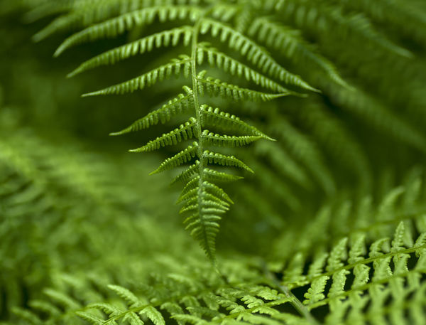 Green feathers Botanical Gardens Climate Close-up Fern Freshness Garden Green Green Color Green Color Growth Leaf Macro Nature Nature Photography No People Pattern Plant Structure Premium_collection Premium Collection Premium Premium Eyeem