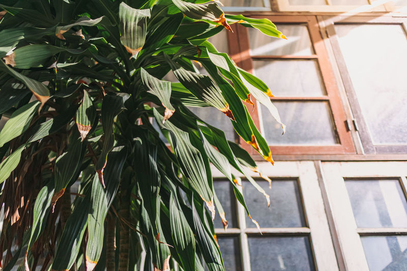 Low angle view of bamboo plant against house