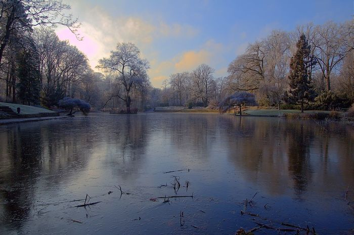 Bare Tree Beauty In Nature Bird Branch Day Hain Bamberg Lake Nature No People Outdoors Reflection Scenics Sky Swan Tranquil Scene Tranquility Tree Water Winter