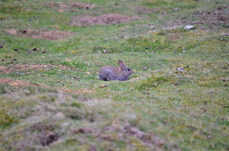 Animal Wildlife One Animal Rodent Mammal Animals In The Wild Grass Plant Land No People Vertebrate Field Day Nature Selective Focus Outdoors Squirrel Side View Hare Rabbit Wildlife Wildlife By Tania Andreea