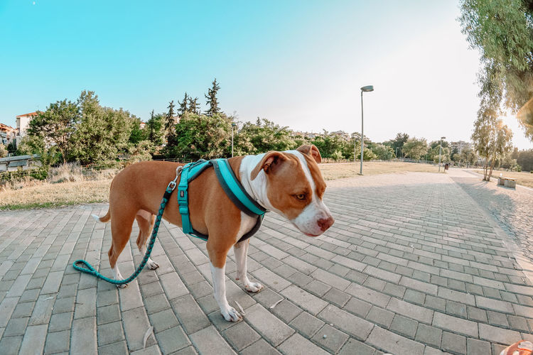 View of dog on footpath