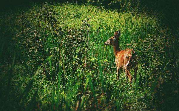 In the meadows Deer Meadow Urban Nature EyeEm Nature Lover Wildlife & Nature Nature Wildlife