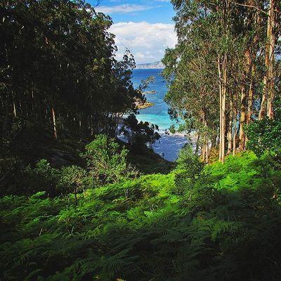 El que no sabe por qué camino llegará al mar, debe buscar al río por compañero🌴🌅 Ciesislands Sea Places Island Paradise Zenplaces Adventure Earth Galifornia Westcoastspain