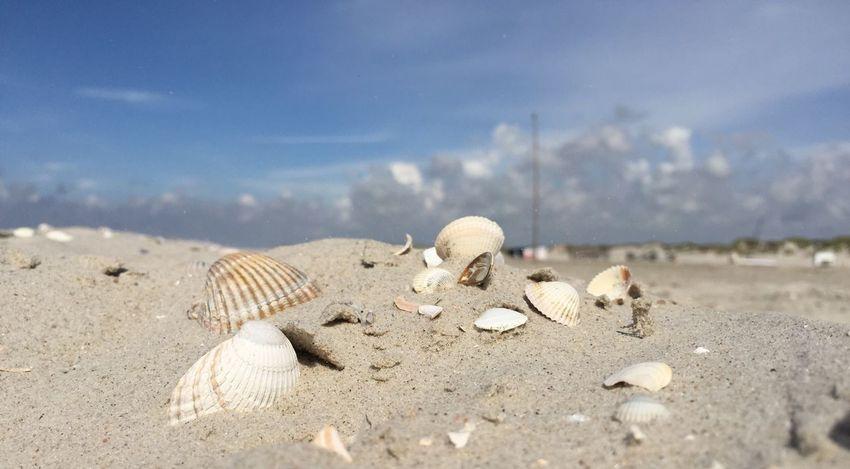 EyeEm Selects Muscheln Strand Beach Muschelschalen Nordseeküste EyeEmNewHere