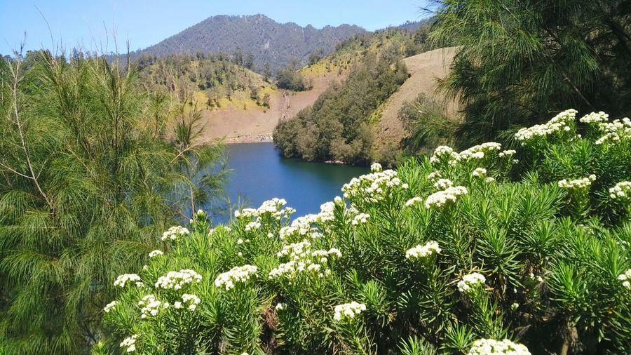 Field of edelweiss Ranukumbolo Lake View Edelweiss Adventure Tree Water Mountain Flower Lake Sky Plant Landscape Forest