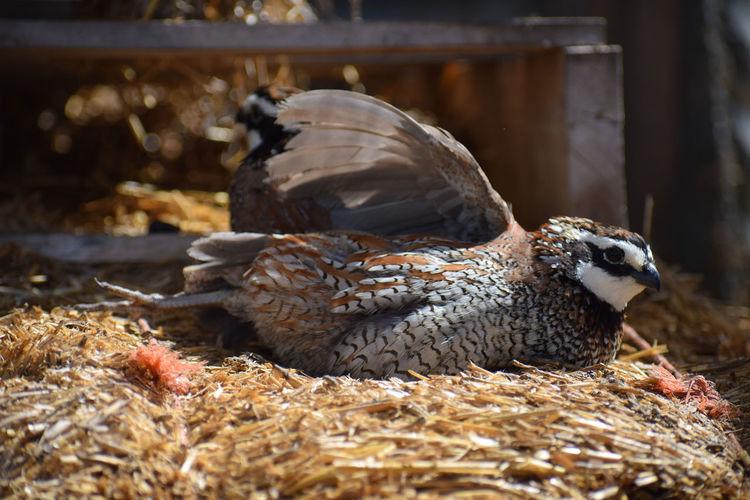 Close-up of birds nesting