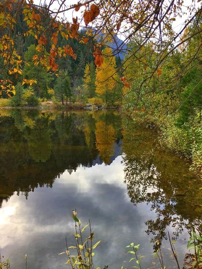 Lost In The Landscape Autumn Leaf Tree Reflection Change Nature Beauty In Nature Water Tranquil Scene Outdoors Growth Day Lake Tranquility No People Scenics Standing Water Branch Waterfront Plant