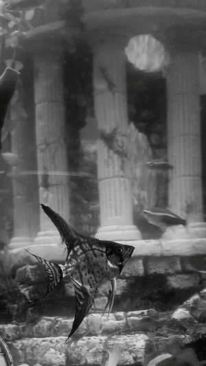 Fish Blackandwhite Angel Fun