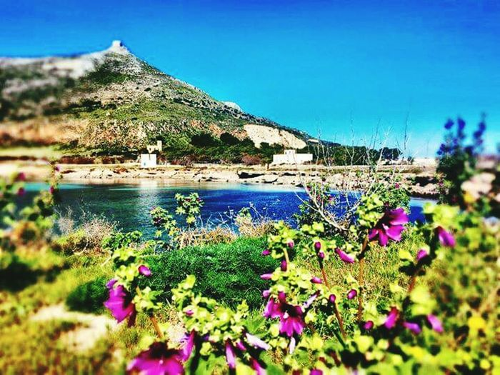 Flower Mountain Nature Beauty In Nature Plant Outdoors Scenics No People Day Uncultivated Growth Blue Tranquil Scene Tranquility Water Landscape Green Color Mountain Range Sky Grass Favignana's Sea Favignana Favignana Isole Egadi Egadi Islands Holidays Favignana 👌🏼 Favignana2017