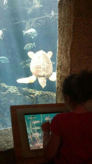 Atlanta Ga Aquarium Turtle Fish Funtimes Schooltrip Capture The Moment